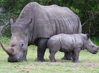 Nouveau musée :  pour sensibiliser aux espèces en voie de disparition