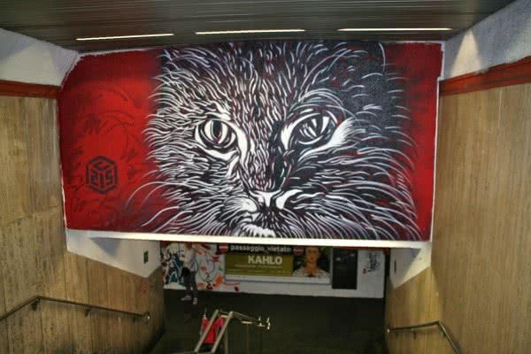 Le chat de c215
