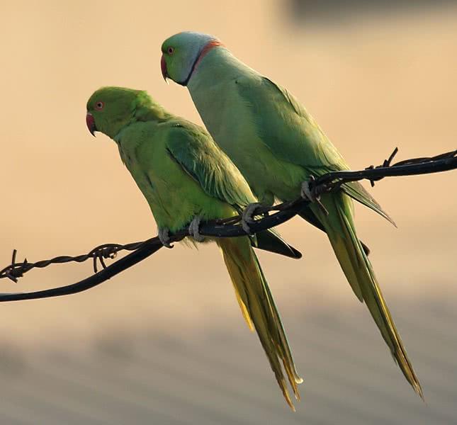 Oiseaux les merveilles du ciel romain rome pratique for Oiseaux du ciel