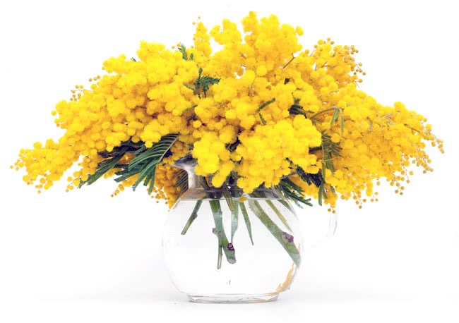 Bouquet mimosa journée des femmes