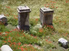 18/10 Les ruines dei fori romani au printemps